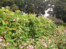 De bloemen en de installaties van de parktuin Stock Fotografie