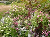 De bloemen en de installaties van de parktuin Stock Afbeeldingen