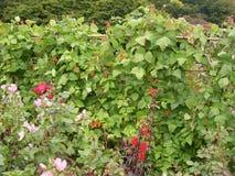 De bloemen en de installaties van de parktuin Royalty-vrije Stock Fotografie