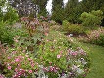 De bloemen en de installaties van de parktuin Stock Foto's