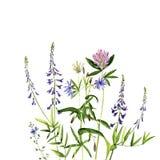 De bloemen en de installaties van de waterverftekening Stock Afbeelding