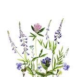 De bloemen en de installaties van de waterverftekening Royalty-vrije Stock Afbeeldingen