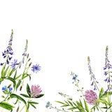 De bloemen en de installaties van de waterverftekening Stock Fotografie