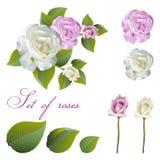 De bloemen en namen knoppen toe Stock Afbeelding
