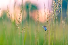 De bloemen en de weide van de de zomerclose-up en een vlinder Helder Landschap Inspirational achtergrond van de aardbanner royalty-vrije stock afbeelding