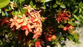 De bloemen groeien in mooie kleuren stock videobeelden