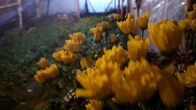De bloemen groeien in mooie kleuren stock footage