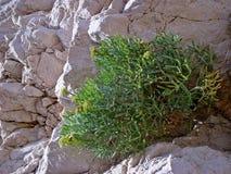 De bloemen groeien op stenen Royalty-vrije Stock Afbeelding