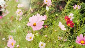 De bloemen in Gyeongju, Zuid-Korea royalty-vrije stock fotografie