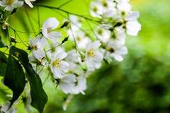 De bloemen in Kew tuiniert dichtbij Londen, U K Royalty-vrije Stock Foto's