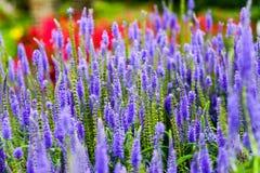 De bloemen in Kew tuiniert dichtbij Londen, U K Stock Foto's