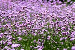 De bloemen in Kew tuiniert dichtbij Londen, U K Royalty-vrije Stock Foto