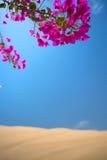 De bloemen kwamen in een oase in de woestijn tot bloei stock foto