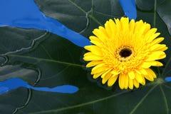De bloemen lagen in water Stock Fotografie