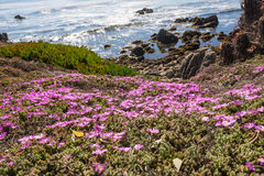 De bloemen langs de kust van Monterey, Californië Royalty-vrije Stock Afbeeldingen