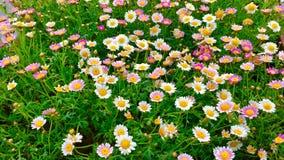 De bloemen in de lente stock fotografie