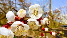De bloemen in de lente royalty-vrije stock foto's