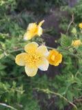 De bloemen in de lente royalty-vrije stock foto