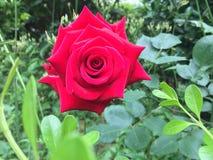 De bloemen in de lente royalty-vrije stock fotografie