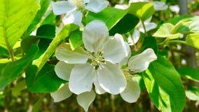 De bloemen in de lente stock afbeeldingen