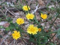 De bloemen in de lente stock afbeelding