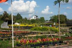 De bloemen met blauwe wolkenhemel Stock Foto