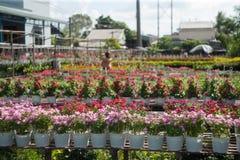 De bloemen met wolkenhemel Royalty-vrije Stock Foto's