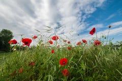 De bloemen neigen aan hemel royalty-vrije stock foto