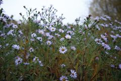 De bloemen op het gebied royalty-vrije stock foto