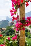 De bloemen op het terras Stock Afbeelding