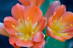 De bloemen op succulent royalty-vrije stock afbeeldingen