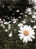 De bloemen sluiten Royalty-vrije Stock Afbeelding