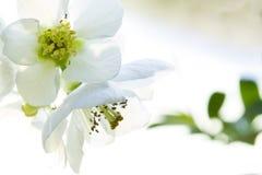 De bloemen sluiten waaier Royalty-vrije Stock Afbeeldingen
