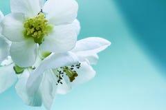 De bloemen sluiten waaier Stock Afbeeldingen