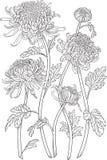 De bloemen van één kleurenchrysant vector illustratie