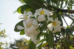 de bloemen van aard maken u gevoel vers Stock Foto