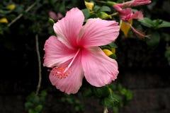 de bloemen van aard maken u gevoel vers Royalty-vrije Stock Foto's
