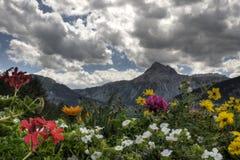De bloemen van alpen Stock Fotografie
