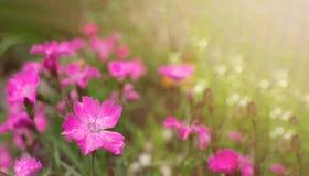 De bloemen van de banner bannerpink lente op groene vage macroclose-up als achtergrond stock foto