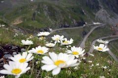 De bloemen van bergen stock foto's