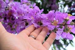 De bloemen van de bloem van de Koningin royalty-vrije stock afbeeldingen
