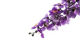 De bloemen van de bloem van de Koningin royalty-vrije stock afbeelding