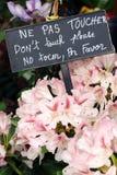 De bloemen van de bloemistwinkel raken geen teken Stock Afbeeldingen