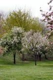 De bloemen van bomen in de lente Royalty-vrije Stock Foto's