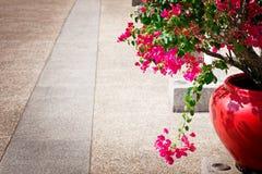 De bloemen van bougainvillea in een terras Stock Afbeelding