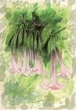 De bloemen van Brugmansia van de engelen` s trompet royalty-vrije illustratie