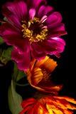 De Bloemen van Charoscuro Stock Fotografie