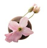 De bloemen van clematissen in kleine vaas stock foto's