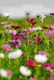 De bloemen van Colorfull in platteland Stock Foto's