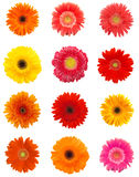 De bloemen van Daisy Royalty-vrije Stock Afbeeldingen